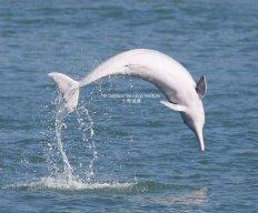 DolphinCap